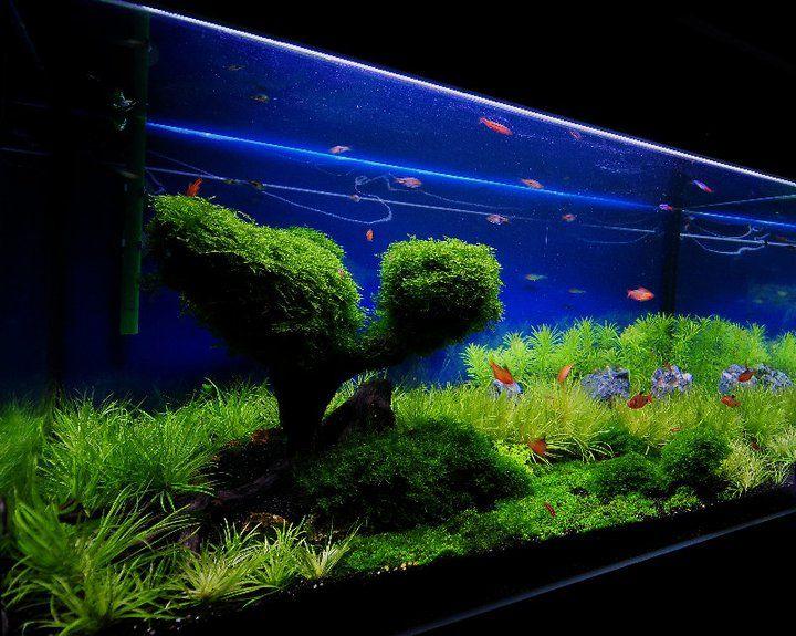 St Augustine Aquarium Facebook