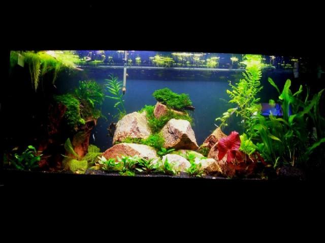 Rainbowlar ve akvaryum bitkileri