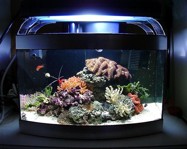 Saltwater Aquarium Questions Saltwater Aquariums 2017