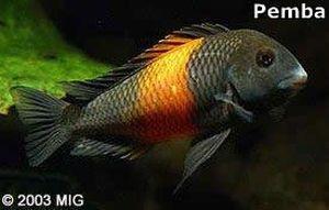 249 Akvaryum Balıkları   Akvaryum Balığı Çeşitleri
