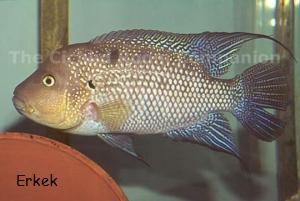Carolina fish talk view single post fs f1 for Carolina fish fry